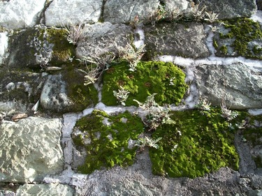 Mineral exposure, endemic lichens