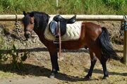 Riding Ranch