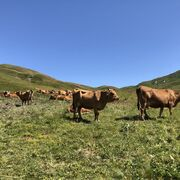 Go back to the source in the Tarentaise valley