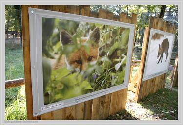 """Photo exhibition """"Animals of the Alps"""" by Guillaume Collombet"""